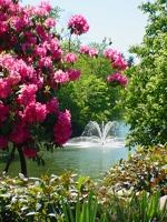 A water feature surrounded by flowers and trees